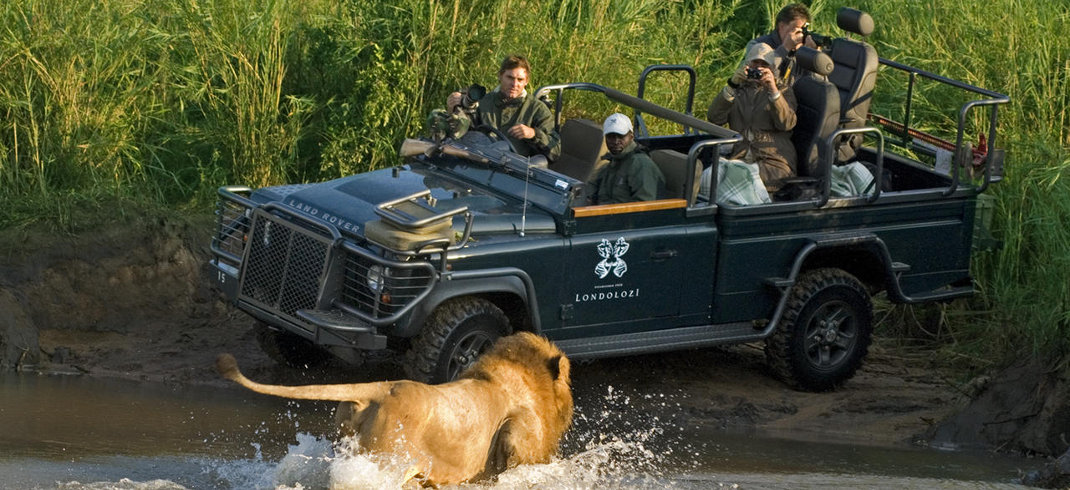 A male lion crosses the Sand river next to a Londolozi game drive vehicle with tourists on it.