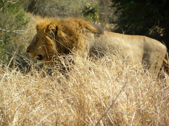 Luxury Ivory Lodge Lion Sands Kruger National Park